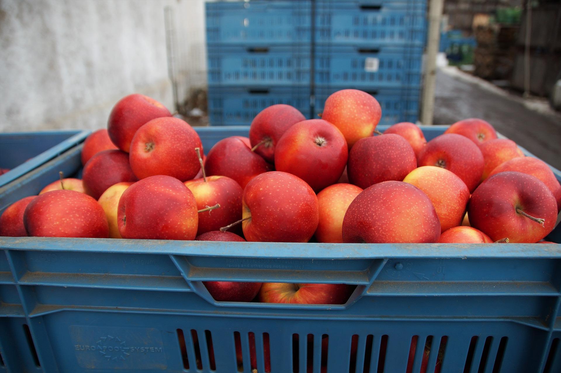 skrzynka plastikowa EURO jabłka
